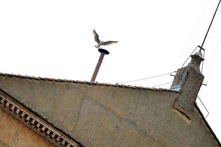 Capilla-Sixtina-Papa-Vaticano-AFP_CLAIMA20130313_0132_14