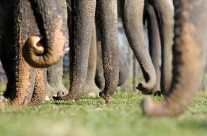 Más empáticos que elefantes