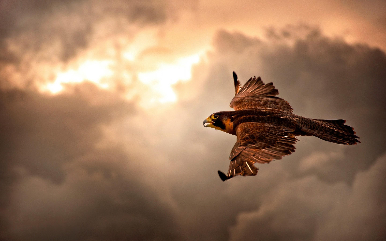 Hawk-lucht-wolken-en-vogels-1800x2880